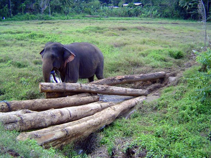 Sri Lanka: Elephant Power