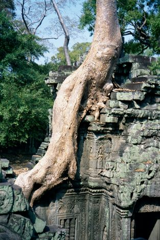 Cambodia (Angkor): Ta Prohm and Vicinity picture 18