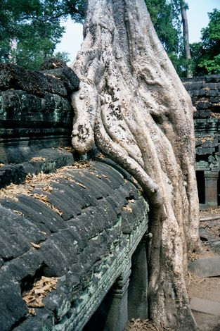 Cambodia (Angkor): Ta Prohm and Vicinity picture 19
