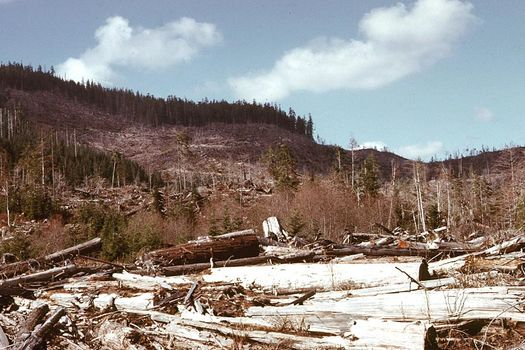Canada (B.C.): Forest Clearance picture 5