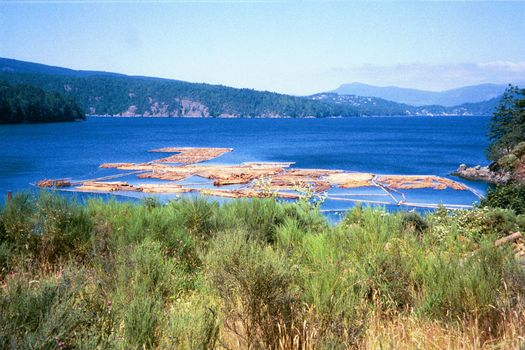 Canada (B.C.): Saltspring Island picture 16