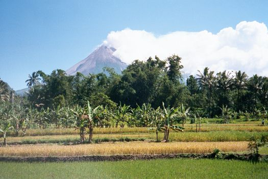 Indonesia: Merapi picture 11