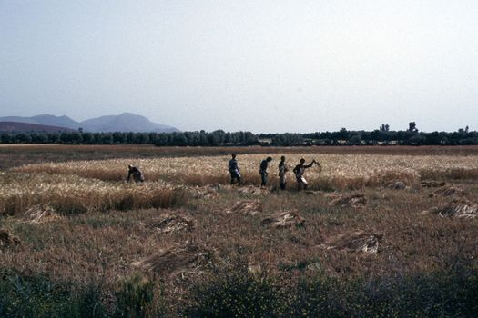 Morocco: Irrigation technologies picture 1