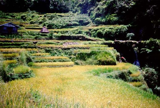 The Philippines: Banaue picture 10