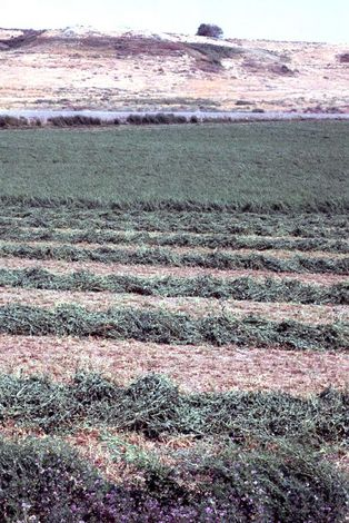 U.S.: West: Bonanza Farming in the Columbia Basin picture 16