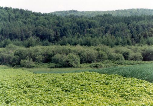 U.S.: East: Farming in Aroostook County picture 7