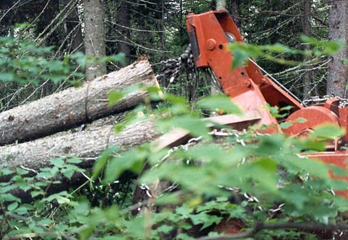U.S.: East: Logging in the Maine Woods picture 11
