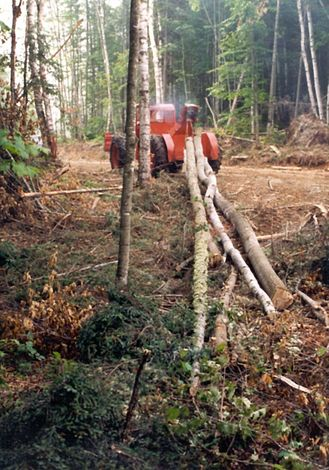 U.S.: East: Logging in the Maine Woods picture 13