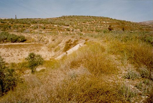 The West Bank: Northern Countryside picture 10