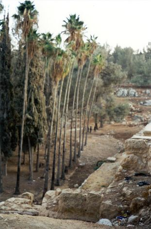 The West Bank: Solomon's Pools picture 17