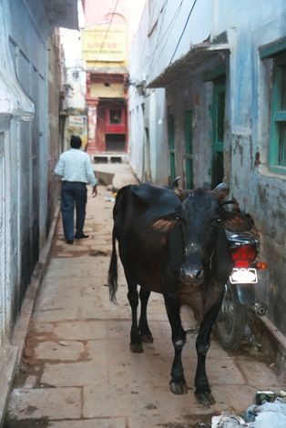 Northern India: Varanasi (Benares) picture 9