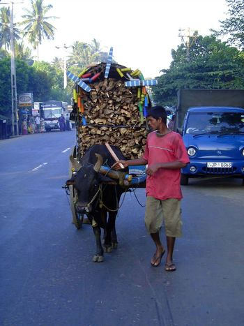 Sri Lanka: Kandy: Now picture 9
