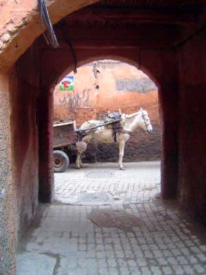 Morocco: Marrakech: The Medina or Old City picture 29