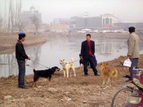 China: Kashgar Sunday Market picture 3