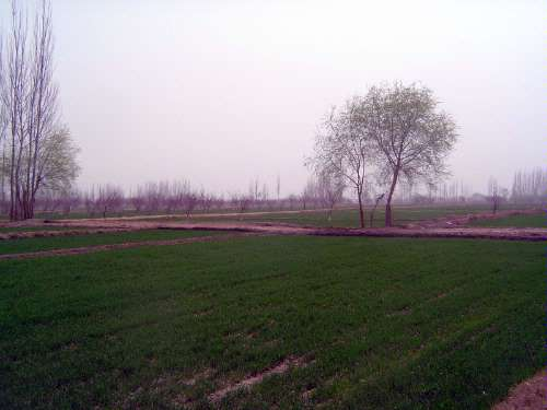 China: Kashgar Oasis picture 10