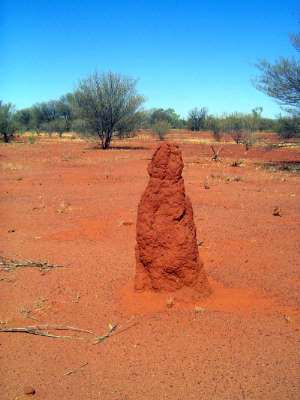 Australia's Northern Territory: Tennant Creek picture 7