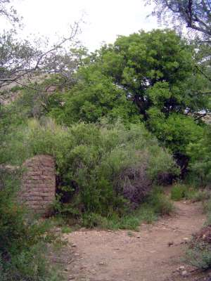 U.S.: West: Big Bend picture 28