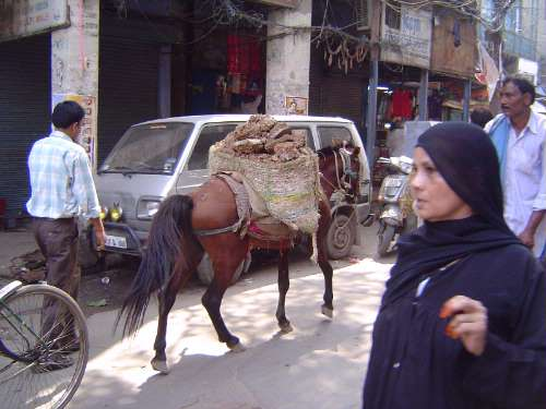 Northern India: Old Delhi (Shahjahanabad) picture 24
