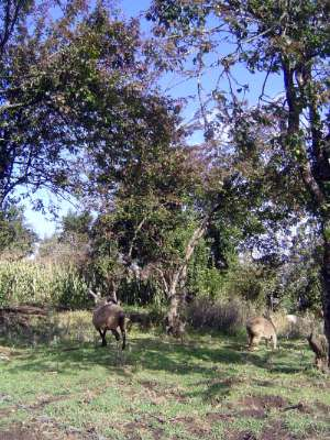 Kenya: Rift Valley Shamba picture 6