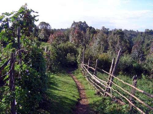 Kenya: Rift Valley Shamba picture 12