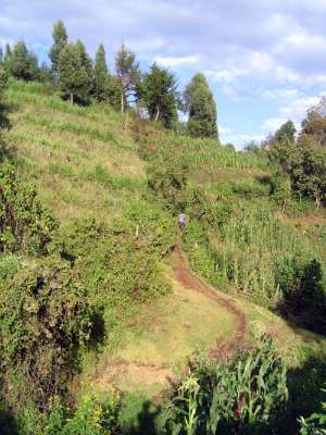 Kenya: Rift Valley Shamba picture 13
