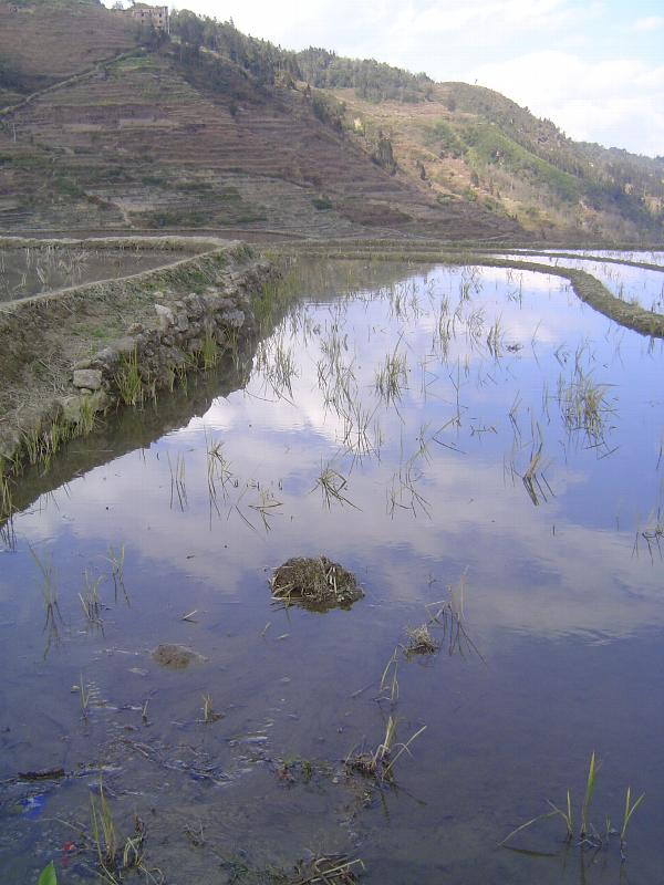 China: Hani Terraces 1: Walking a Channel picture 11