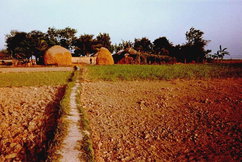 Bangladesh: Tagore Country picture 8