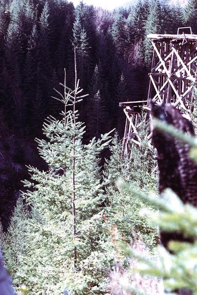 Canada (B.C.): Forest Clearance picture 9