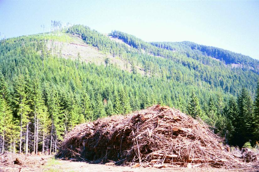 Canada (B.C.): Forest Clearance picture 6