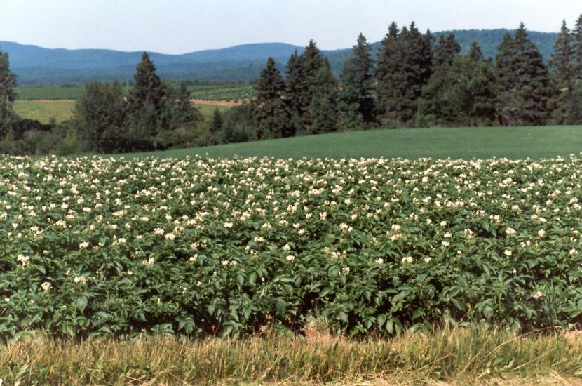 The Eastern United States: Farming in Aroostook County picture 5