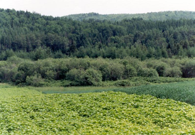 The Eastern United States: Farming in Aroostook County picture 7