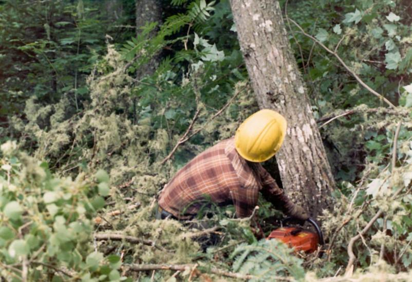 The Eastern United States: Logging in the Maine Woods picture 5