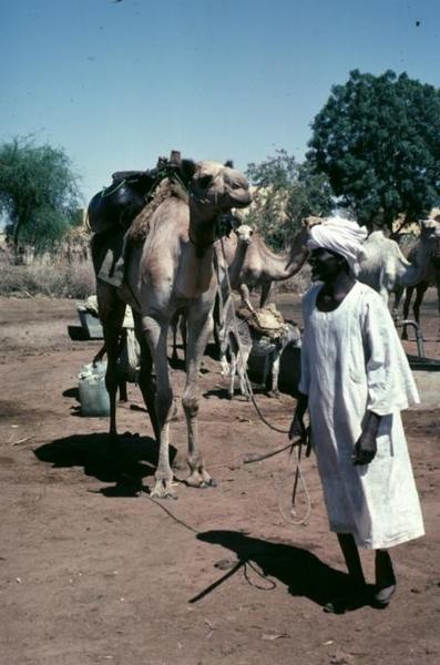 Sudan: Darfur and Kordofan picture 6