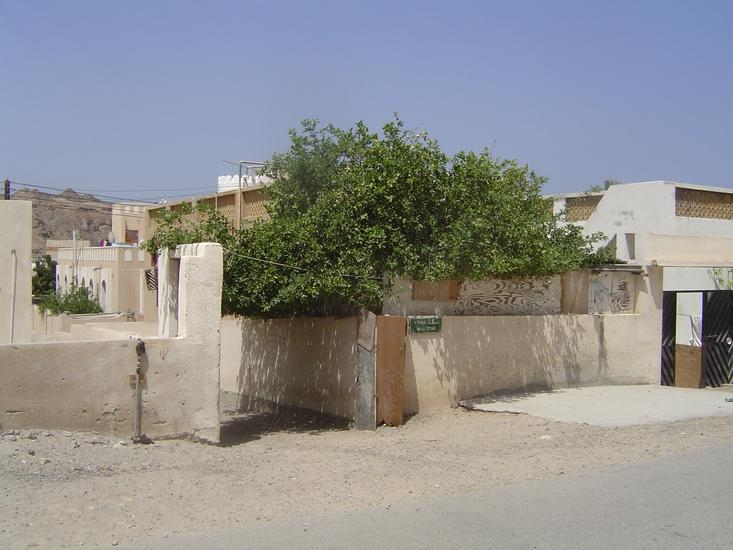Oman: Bustan picture 9