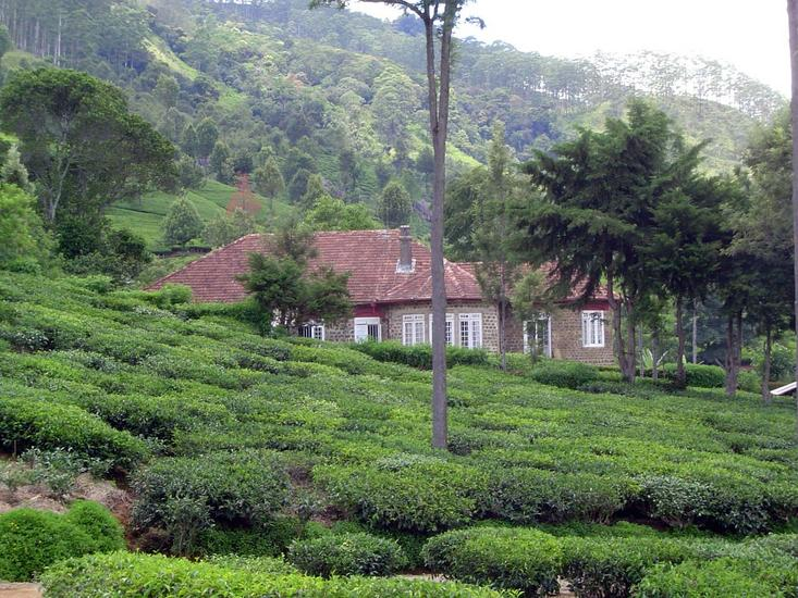 Sri Lanka: Tea Country