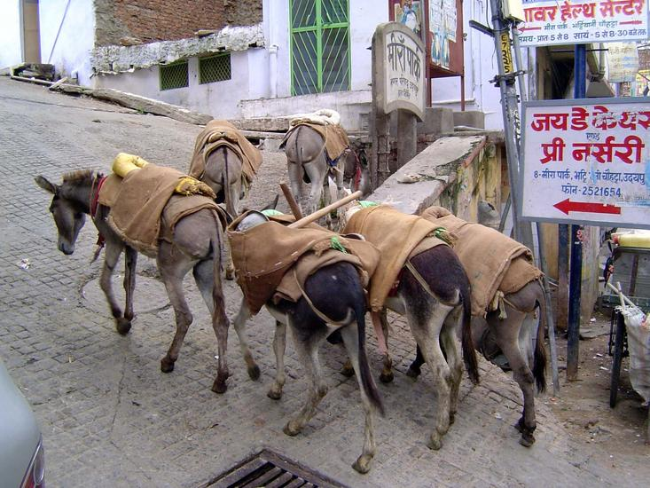 Peninsular India: Udaipur City picture 12