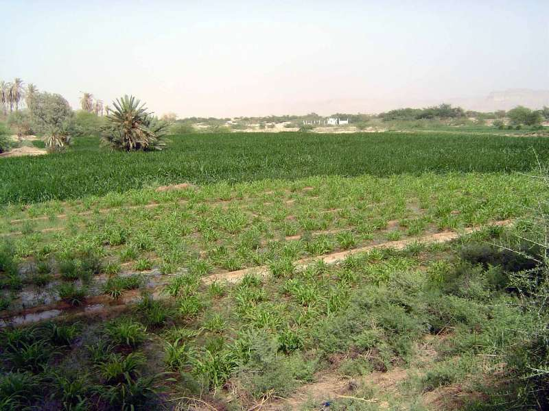 Yemen: Hadramaut Irrigation picture 4