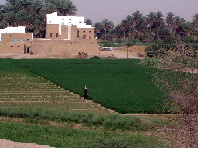 Yemen: Hadramaut Irrigation picture 10