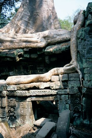 Cambodia (Angkor): Ta Prohm and Vicinity picture 15