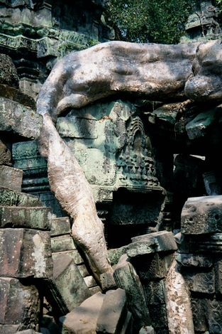 Cambodia (Angkor): Ta Prohm and Vicinity picture 17