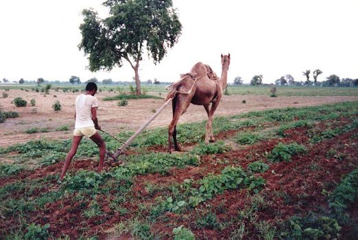 India Themes: Farming Technology
