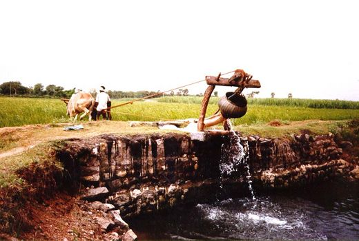 India Themes: Irrigation 1: Ancient Methods picture 6