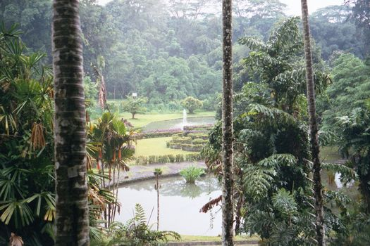 Indonesia: The Botanical Gardens at Bogor picture 5