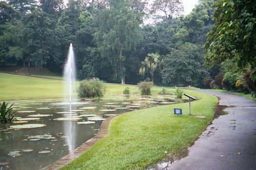 Indonesia: The Botanical Gardens at Bogor