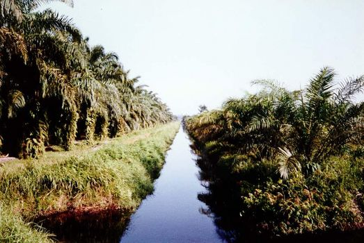 Malaysia: Oil Palm and Rubber picture 2