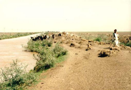 Sudan: The Gezira picture 6