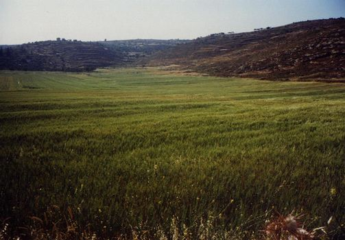 The West Bank: Northern Countryside picture 1