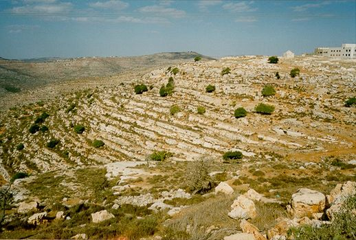 The West Bank: Northern Countryside picture 5