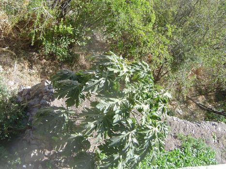 Oman: Sharayjeh picture 24