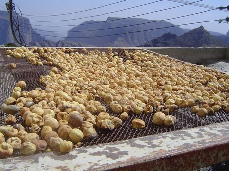 Oman: Sharayjeh picture 26